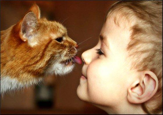 Фелинотерапия (кошкотерапия): как кошки лечат людей