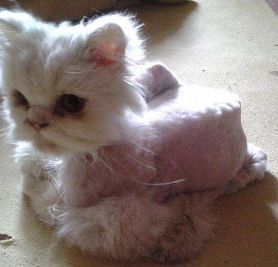 Вторая жизнь  кота, найденного под окнами дома
