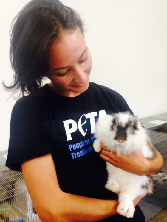 Около 100 кроликов были спасены в Калифорнии