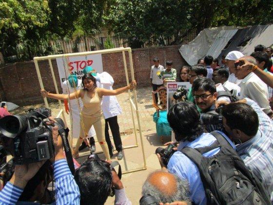 Необычная акция в Индии против вивисекции: поставьте  себя на место животных