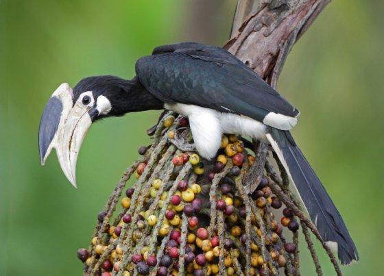 Индия признала права птиц