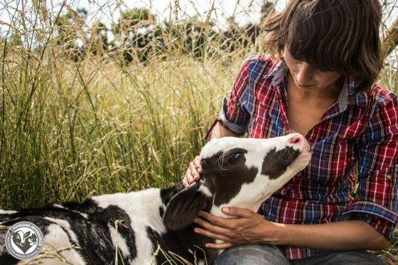 Приют спасённых животных в Чили Santuario Igualdad Interespecie