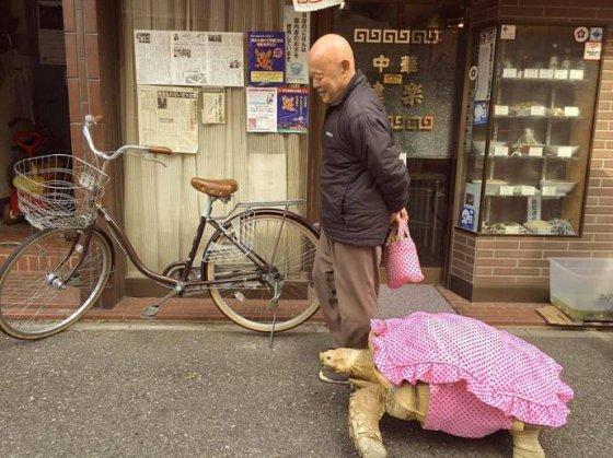 Японец гуляет по улице с огромной черепахой