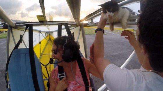 """""""Летающий кот"""" набрал миллионы просмотров и попал в мировые СМИ"""