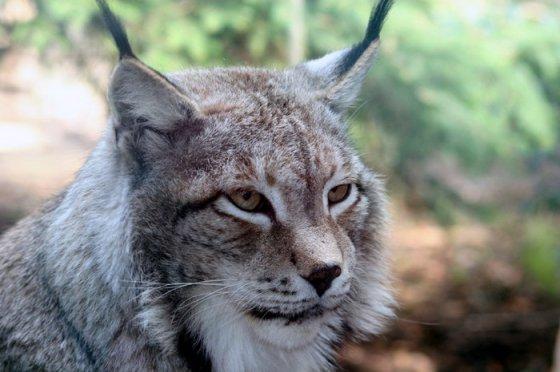 15 видов животных, находящихся на грани вымирания по вине человека