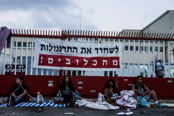 Активисты ALF Израиля заблокировали ворота  скотобойни