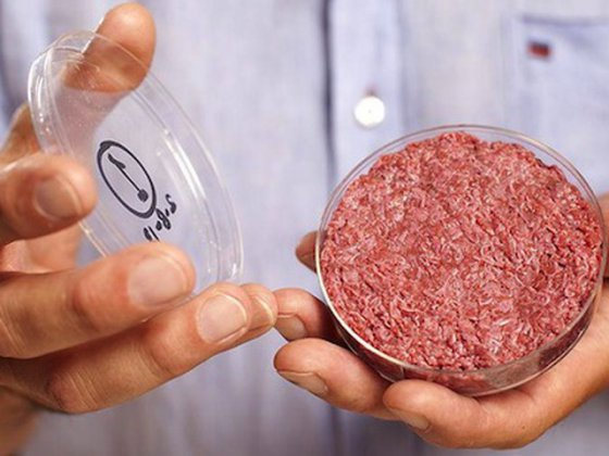 Ученые приступили к созданию  синтетического куриного  мяса