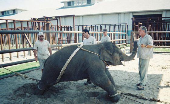 Свободу животным:  слоны устроили погром