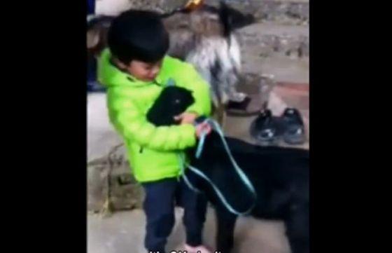 Ребёнок  борется за жизнь своего друга:  очень эмоциональное видео
