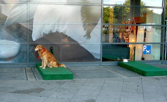 Паркинг для собак в магазинах IKEA
