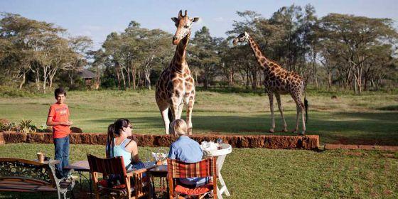 Экзотический отель с жирафами  на территории питомника Giraffe Centre
