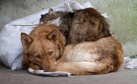 День  бездомных животных:  опыт  решения проблемы  в разных странах