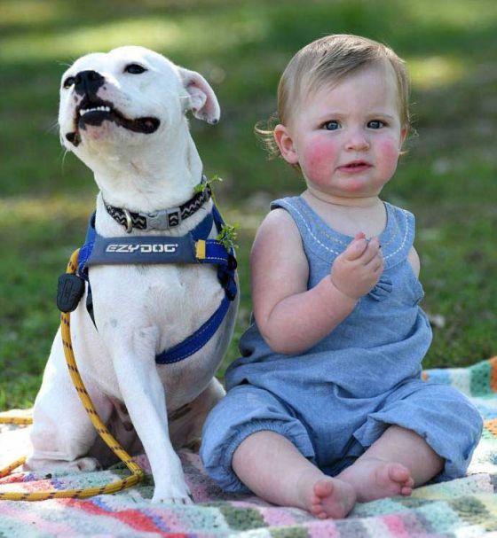 Пёс без лапы и девочка без руки стали неразлучными друзьями