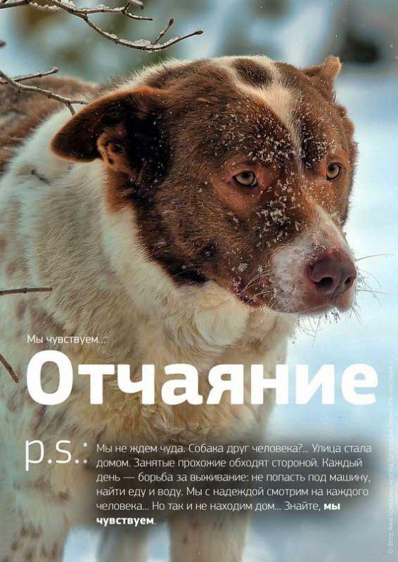 """Социальный проект в защиту бездомных животных  """"Мы чувствуем"""""""