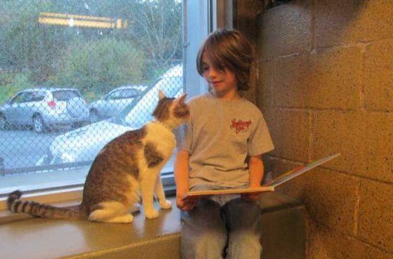 """В штате Пенсильвания приют для кошек организовал акцию """"Друзья по книге"""""""