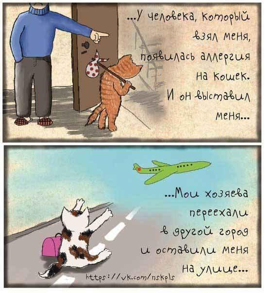 Комикс от волонтёров Новосибирска на тему разведения животных