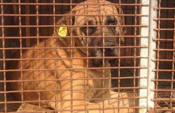 В Южной Корее спасли более 100 собак