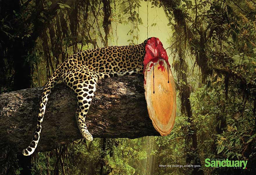 Картинки про защиту природу