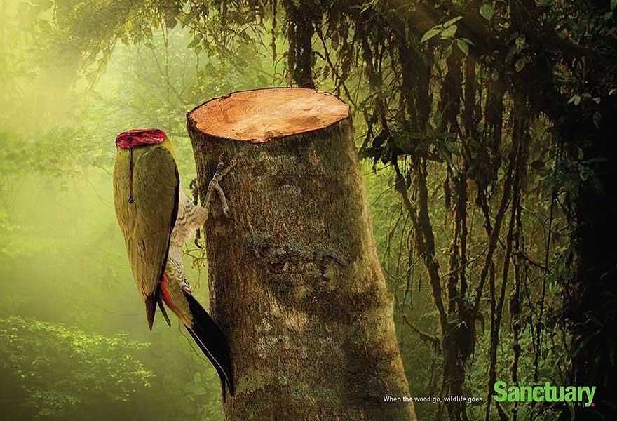 Картинки животных пострадавшие от природы