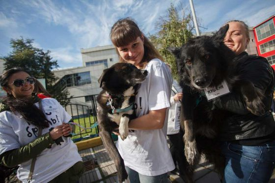 В Москве прошла выставка  приютских животных  «Надо Брать! Осенью!»