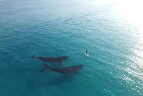 Видео с китами из Австралии набрало миллионы просмотров за две недели в интернете