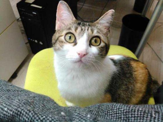 Японская компания стимулирует  сотрудников брать кошек из приюта и приносить  на работу