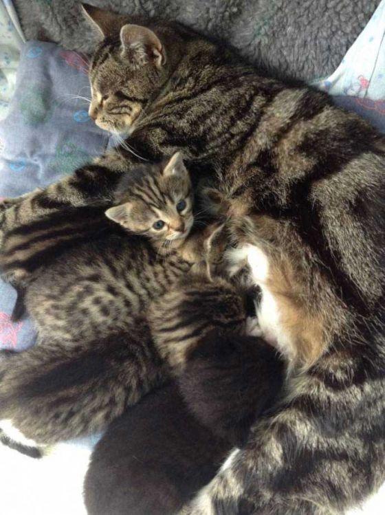 Кошка пришла за котятами в ветклинику