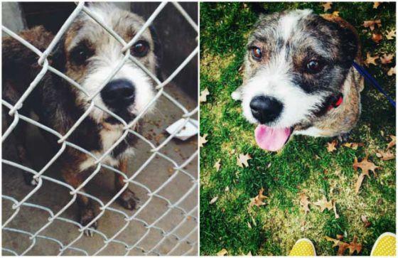 Собаки до и после того, как их забрали из приютов (фото)