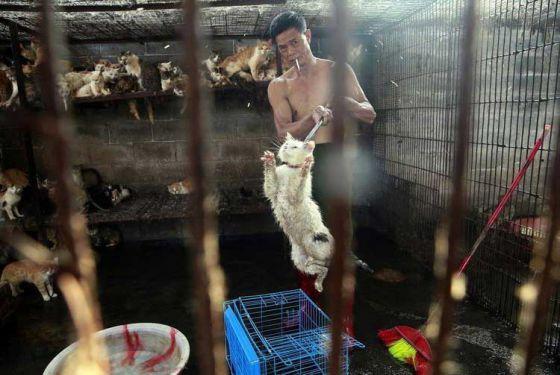 Кота  спасли за минуту  до смерти: история ужасной фотографии с фестиваля мяса в Юйлинь