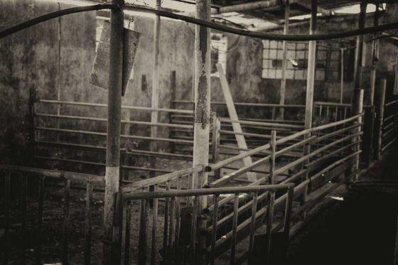 Эти стены могут многое рассказать: заброшенная ферма в Израиле (фото, видео)