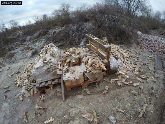 «ВИТА» посетила звероферму в Ленинградской области: шокирующие факты расследования