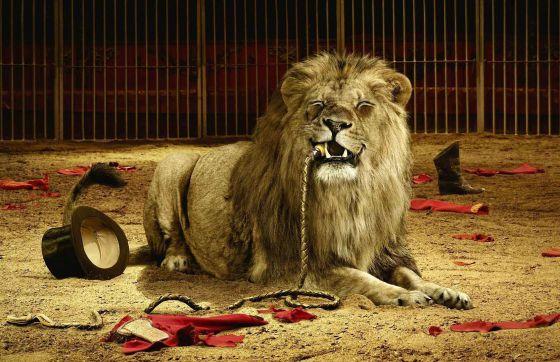 В  штате  Гавайи  запретят  цирки  с  животными