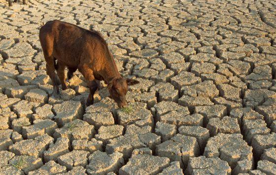 Животноводство — одна из причин глобального потепления: почему  молчат правительства?