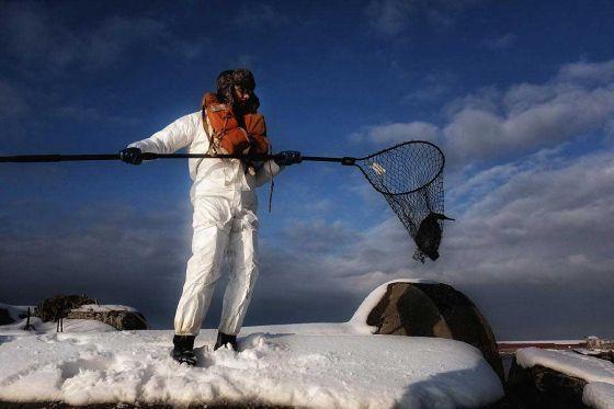 Фоторепортаж с места катастрофы:  волонтеры спасают побережье Невельска от нефтепродуктов