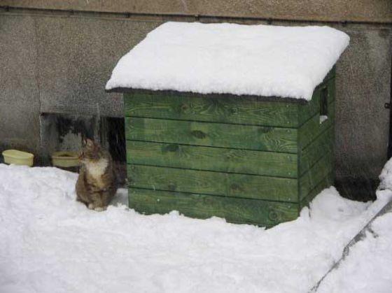Бездомных кошек в Польше обеспечивают жильём
