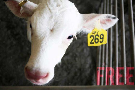 269life: Ни одно животное не должно эксплуатироваться ради удовлетворения эгоистических потребностей человека