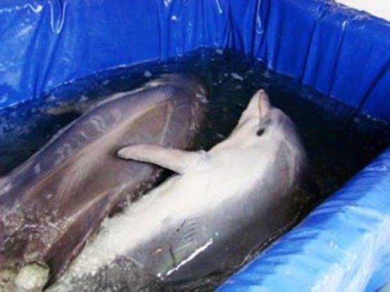 Оборотная сторона  дельфинария и как содержатся животные во время гастролей