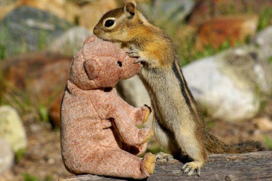 Бурундук Джаспер и медвежонок Тедди