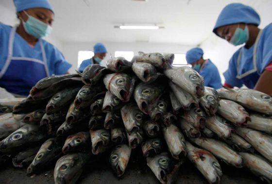 В рыбе нашли химию: круговорот пластика в природе