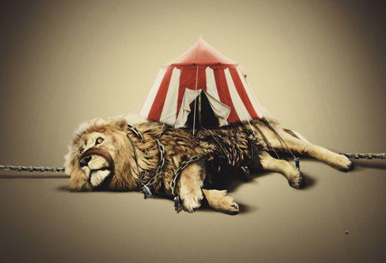 Польский город  Вроцлав отказался принимать цирки с животными