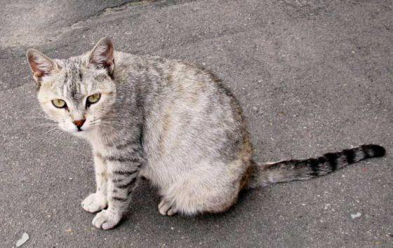 Власти Варшавы обеспечивают кормом бездомных кошек