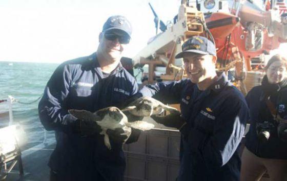 Более 130 морских черепах были спасены в США