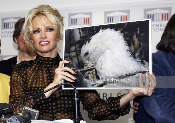 Памела Андерсон  выступила за запрет фуа-гра на пресс-конференции в Париже