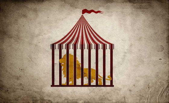 В Варшаве запретили цирковые шоу с участием животных