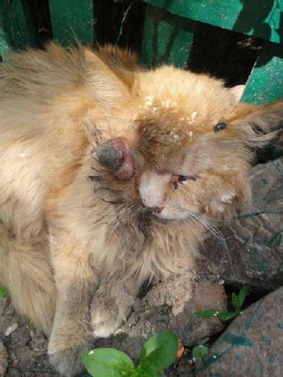 Найденный в ужасном состоянии кот обрёл семью
