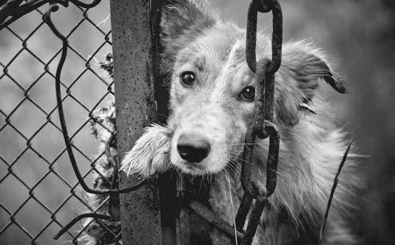 6 и 7 февраля в Москве пройдёт  выставка приютских животных, которые хотят «Домой!»