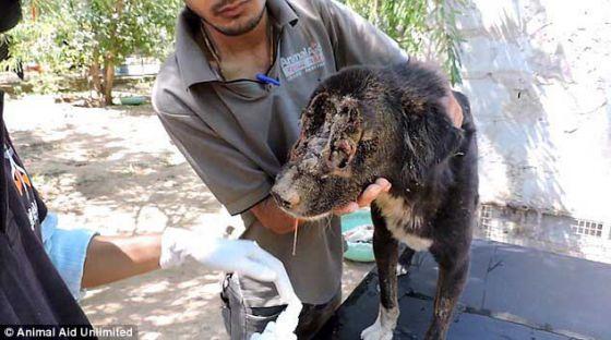 Поразительное восстановление  пса по имени Калу