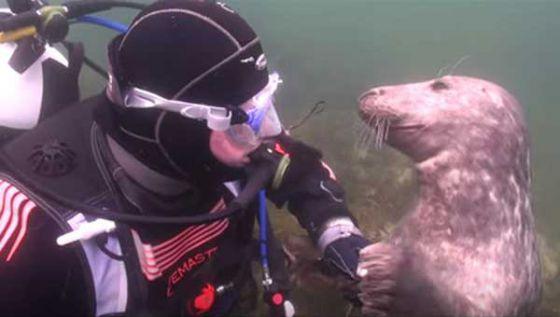 Дайверу посчастливилось встретить очень  дружелюбного тюленя