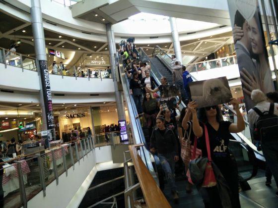 ALF Израиля провели акцию в торговом центре Тель-Авива