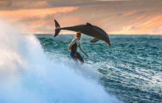 13 февраля - Всемирный день любви к дельфинам